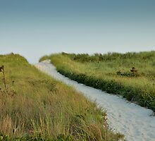 Beach Path by Jeff Notti