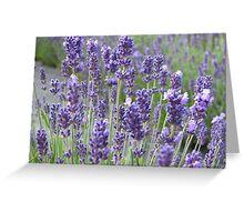 Beautiful lavender flowers in full bloom Greeting Card