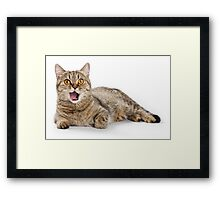 funny striped cat licked Framed Print
