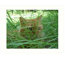 Tiger in the Tall Grass Art Print