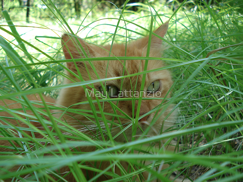Tiger in the Tall Grass by May Lattanzio
