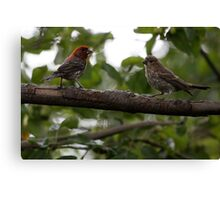 Purple Finch Pair on a Branch Canvas Print