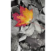 Fallen Leaves 3 (Untitled) Photographic Print