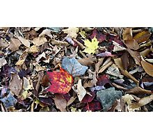 Fallen Leaves 2 (Untitled) Photographic Print