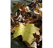 Fallen Leaves 4 (Untitled) Photographic Print