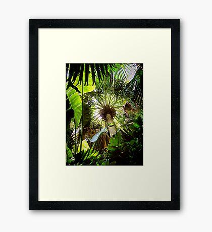 tropical canopy ... Framed Print