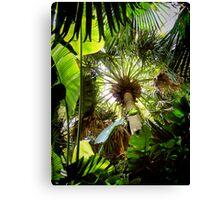 tropical canopy ... Canvas Print