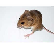 Wood Mouse Photographic Print