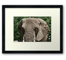 Big Framed Print