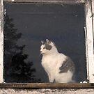 barn cat by Lynne Prestebak
