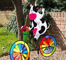 Cycling cow by Thad Zajdowicz