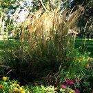 I Love Tall Grasses! by Lynn Moore