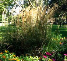 I Love Tall Grasses! by Lynn Moore