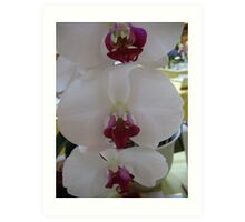 White Orchid Condo Art Print