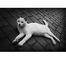 Lazy Cat Photographic Print