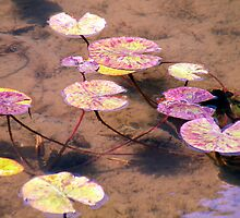 Lily pads by HanieBCreations