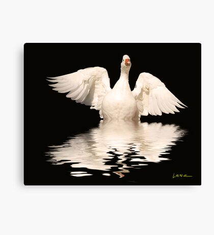 White Goose Canvas Print