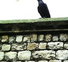 The Raven by Timardis