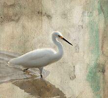 Snowy Egret in Grunge by Rosalie Scanlon