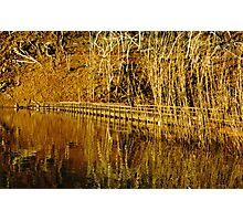 Lake Eildon - Darlingford Bridge Photographic Print