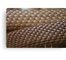 Brown Scales Canvas Print