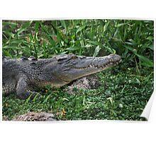 Fresh Water Crocodile Poster