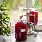 Making Country Wine: Plum by DonDavisUK