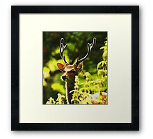Sika (cervus nippon) stag in velvet Framed Print