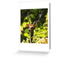 Sika (cervus nippon) stag in velvet Greeting Card