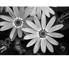 Black and white daisies Photographic Print