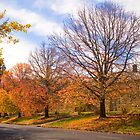Autumn colours in Beechworth outside the gaol by Elana Bailey