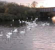 White Swan's large school on the Canal Day out by Streetpages