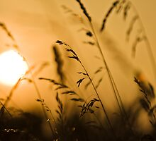 Summer Grass in the Summer Sun by Andy Freer