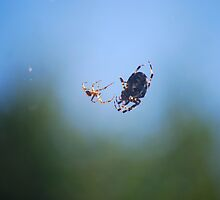 Mr. Spider's Wedding by Rowan  Lewgalon