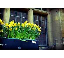 Daffodils on St. Aldate's Photographic Print
