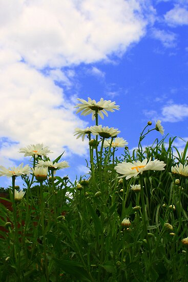 Clouds And Daisies by kkphoto1