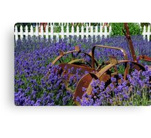 Adrift in the Lavender Canvas Print