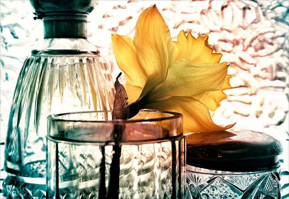 Daffodil - Exercise in Translucency by micklyn