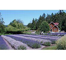 Farmhouse at Purple Haze Lavender Farm Photographic Print