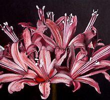 Nerine Sarniensis by pucci ferraris