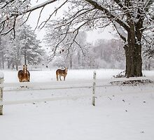 horses in the snow by RosiesPhotos