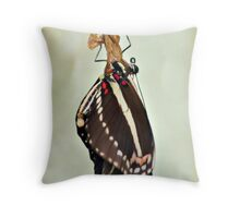 New Zebra Longwing Butterfly Throw Pillow