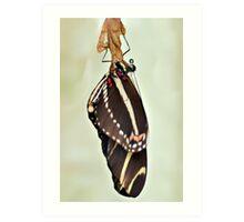 New Zebra Longwing Butterfly Art Print