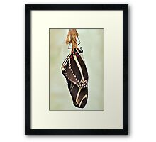 New Zebra Longwing Butterfly Framed Print