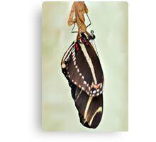 New Zebra Longwing Butterfly Canvas Print