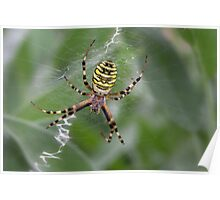 Wasp Spider Poster