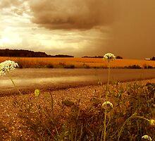 Rainy Season by Sarah Quandt