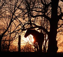 Only Whisper At Sunset by Katie Butler