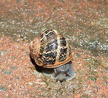 Mr Snail by Tony Blakie