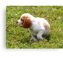 Puppy Considering Next Move  Canvas Print